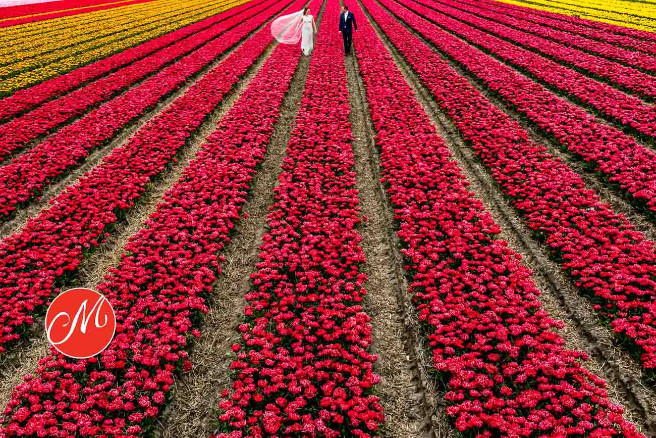 Awardwinnende foto-Noordwijk-Bloemenveld
